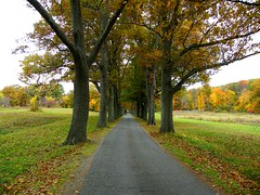 A Street of Trees (Stanley Zimny (Thank You for 32 Million views)) Tags: tree skylands botanical garden street vanish