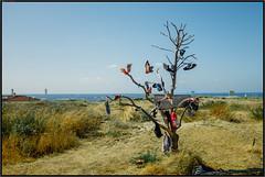 """Windboom"" (RalfK61) Tags: 07 noordwijk urlaub ferien 2018 holland juli"