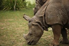 IMG_4488 (gabrielgs) Tags: holiday holiday2018 vakantie2018 camping frankrijk france zoo la fleche lafleche animals dierentuin loire