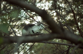 Sleeping dogs (cats)