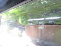 IMG_8289 (Andy E. Nystrom) Tags: bellevue washington wa bellevuewashington
