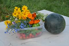 harvest before the rains (Moon Rhythm) Tags: garden wildflowers harvest watermelon basil tomatoes goodies igrow homemade