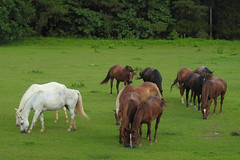 Natchez Trace - Colour Hugs (Drriss & Marrionn) Tags: mississippi natcheztrace usa outdoor travel animal horse horses mammal mammals mammalia meadow grass trees field natcheztraceparkway