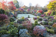 Autumn colours after frost (Four Seasons Garden) Tags: four seasons garden england english uk walsall colour foliage leaves 2017 flowers deciduous autumn conifer evergreen acers japanese maple marie tony newton red blue yellow green november palmatum frost bestofautumn azalea topiary photinia fraseri robin