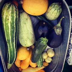 Farmers Market Veggies (booboo_babies) Tags: vegetables zucchini eggplant farmersmarket veggies cucumbers lubbock autumn autumncolors fall