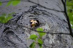 't Hof en Oranjepark Vlaardingen (Hugo Sluimer) Tags: oranjepark thofenoranjepark vlaardingen nederland zuidholland holland natuur nature natuurfotografie natuurfotograaf naturephotography