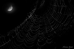 misteriose trame al chiaro di luna, mysterious plots under the moonlight  (explored) (adrianaaprati) Tags: moon spiderweb cobweb textures moonlight macro summer august mystery composition