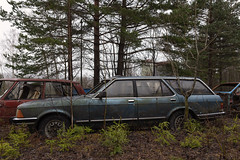 Ford Granada 2.8i GL (mariburg) Tags: rotten marode forgotten ruin decay desolate derelict cars rustycars auto canoneos6d sigma35mm14dghsmart ford