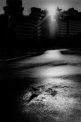 Sunlight 727 (soyokazeojisan) Tags: japan osaka bw city street sun light pigeons blackandwhite monochrome analog olympus m1 om1 50mm film trix kodak memories 1970s 1976