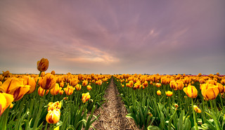 The Tulips at the End of the Universe.