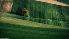Colline (SDB79) Tags: molise ururi colline verde albero campagna terra paesaggio natura