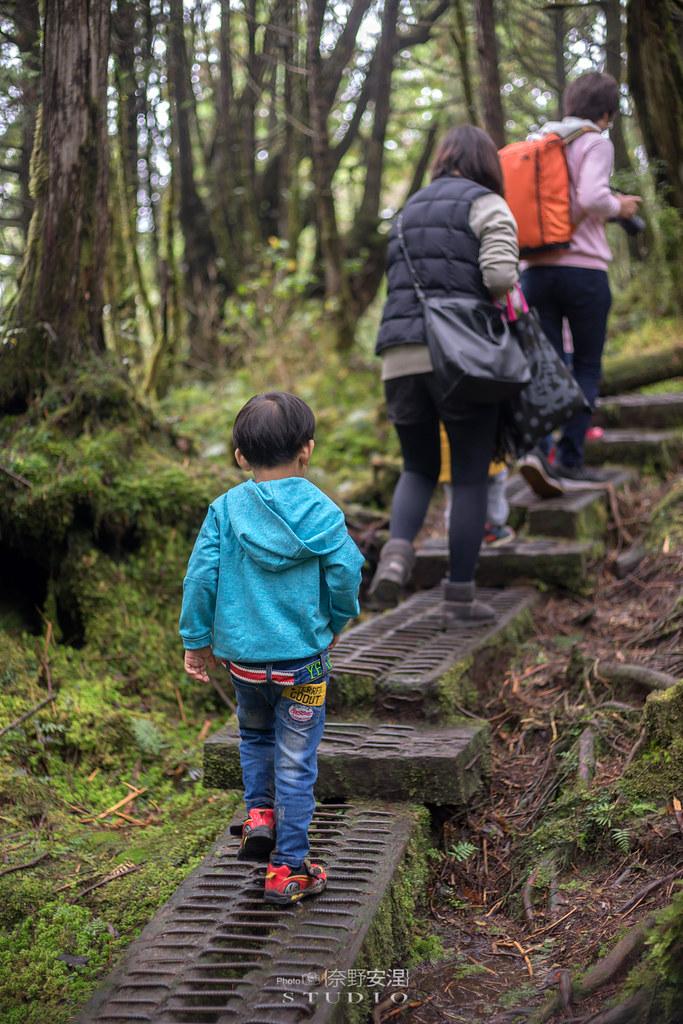 太平山翠峰湖環山步道 |走在泥濘的道路上,只為途中美景 | 宜蘭大同鄉33