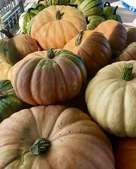 Autumn Cucurbita! (Melinda Stuart) Tags: squash cucurbita berkeleybowl display autumn pumpkin color fruit vegetable ca season grocery market morning