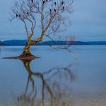 That Wanaka Tree-9 thumbnail