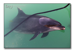 Brest, port de commerce 2018 - Randy le dauphin ambassadeur (porte-plume) Tags: brest port dauphin randy