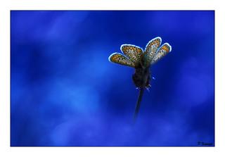 Les ailes