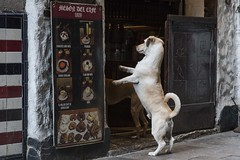 Anticipation of a treat (charlesgyoung) Tags: barcelona spain streetphotography travelphotography charlesyoung nikon nikonphotography nikondx urban