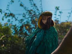 Macaw (tiago.afons) Tags: macaw zoo