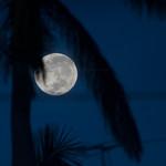 dawn moon thumbnail