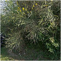 anselmo 68 (beauty of all things) Tags: italien toskana montespertoli anselmo quadratisch flora