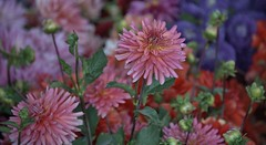 Floral Immersion (Scott 97006) Tags: flowers beauty nature colorful fresh delightful