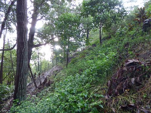 starr-180827-0551-Eucalyptus_sp-flood_in_intermittent_stream_view_trail-Hawea_Pl_Olinda-Maui