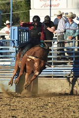 "Baker County Tourism – basecampbaker.com 47206 (Base Camp Baker) Tags: oregon ""easternoregon"" ""bakercountytourism"" basecampbaker ""basecampbaker"" ""bakercounty"" rodeo cowboys ""bakercitybroncandbullriding"" ""bakercity"" ""oregonrodeo"" ""minersjubilee"" oregonrodeo ramrodeo traveloregon travel tourism roughstock rodeolife bulls bullriding"