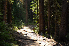 Morning Light (stochastic-light) Tags: landscape trees forest woods sun sunlight sunbeam crepuscular rays trail hiking hike greenmountaintrail rockymountainnationalpark rmnp nationalpark nps co colorado nikon d810 zeiss carlzeiss zf2 milvus2135 milvus135 apo apochromatic cinematic