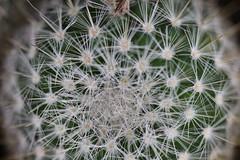 IMG_0205 Cactus (Fernando Sa Rapita) Tags: mallorca sarapita canon canoneos eos1300d sigma sigmalens cactus plant planta macro espinas
