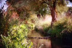Somewhere in Bavaria ... (d heinz) Tags: creek brook sommer salvadordali summer bayern bavaria childhoodmemory kindheitserinnerung pictorialists pictorialism piktorialismus pictorialismus pictorialist bach wilderness wildnis