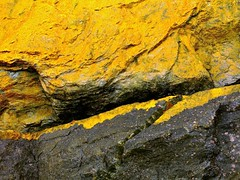 liquid gold (vertblu) Tags: rocks seashore seaside seashoreplants aquaticplants diagonal almostabstract abstractfeel yellow golden black lichen vertblu