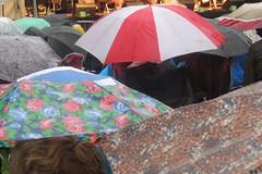 umbrellas 3 c
