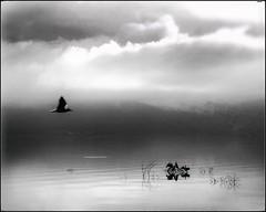 * (PattyK.) Tags: ioannina giannena giannina epirus ipiros balkans hellas ellada greece grecia griechenland whereilive snapseed ιωάννινα γιάννενα ελλάδα βαλκάνια ευρώπη europe europeanunion bird nature πουλί πουλιά φύση nikond3100 lake pamvotida ioanninalake lakeside lakefront waterfront bythelake wildlife λίμνη παμβώτιδα λίμνηπαμβώτιδα λίμνηιωαννίνων παραλίμνιο μώλοσ δίπλαστηλίμνη νερό σύννεφα