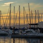 The Marina thumbnail