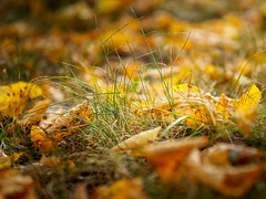 Autumn (banagher_links) Tags: olympus omd em10 mark iii sigma nature moscow mft micro 43 russia