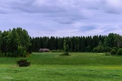 Lato metsan reunassa (nousku) Tags: mmp suomi finland sysmä landscape tamron