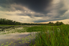 Moody Day @ Tommy Thompson Park (A Great Capture) Tags: agreatcapture agc wwwagreatcapturecom adjm ash2276 ashleylduffus ald mobilejay jamesmitchell toronto on ontario canada canadian photographer northamerica torontoexplore summer summertime été sommer 2018 rebel t5i efs1018mm 10mm wideangle landscape paisaje paysage landschaft eos digital dslr lens canon natur nature naturaleza natura naturephotography naturethroughthelens scenery scenic sky himmel ciel overcast cloudy waterscape wet water agua eau outdoor outdoors outside rain rainyday rainy urban wilderness tommy thompson park leslie street spit
