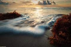 To escape (gusdiaz) Tags: florida beach southbeach sunrise ocean waves water beautiful relaxing nature naturephotography fujifilm fuji xt2 vacation summer amanecer oceano playa agua olas algas espuma waterscape