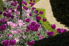 JLF14601 (jlfaurie) Tags: maintenon château castillo palace 22042018 jardin garden tulipes tulipanes tulips mechas gladys amigos friends michel magda sergio primavera printemps pentaxk5ii mpmdf jlfr jlfaurie spring flowers flores fleurs agua eau water canal intérieurs interiores inside