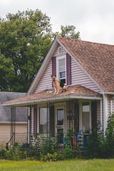 Roof dog (◀︎Electric Funeral▶︎) Tags: omaha midwest councilbluffs nebraska lincoln fremont desmoines kansascity kansas missouri iowa roofdog fujifilmxt2 digital photography