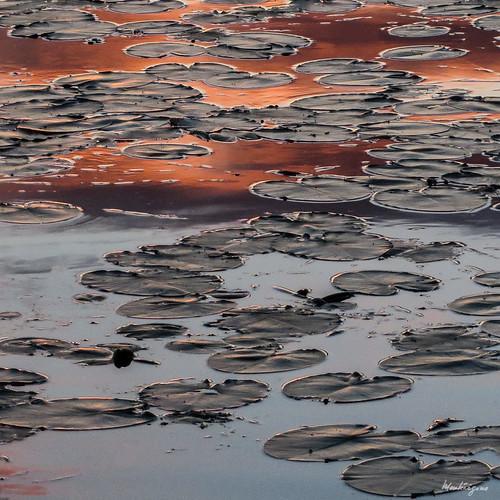 Orange Reflection - Réflexion orangée