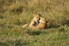 _KEN5963_DxO (Emmanuel Bonnetot) Tags: kenya 2018 masai mara