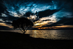 From the Shore of the Shadows, I contemplated all the power of light. (Ramiro Francisco Campello) Tags: anochecer atardecer paisaje landscape shore orilla border argentina grenuol ramirofranciscocampello solo alone luz sombra soledad colors color cielo bahiablanca lagunasaucegrande montehermoso buenosaires cloud tree hope sky darkeness shadow