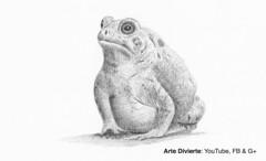 Cómo dibujar un sapo (rana) - Narrado (artedivierte) Tags: arte dibujo artedivierte sapo rana tutto3 artistleonardo leonardopereznieto patreon tutorial