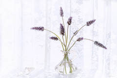Lavender and Lace (Summername) Tags: flowers vase glass floral lavender lace stopper canon flickr shadows light sunlight curtain