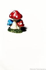 The toad stool IMG_9625-1 (matwith1Tphotography) Tags: matwith1t canon eos70d 70d 100mm toadstool mushroom figurine fairygarden smileonsaturday miniinminimalism