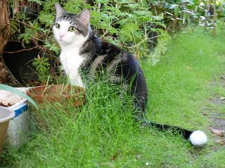 Kewpie: Garden Supervisor
