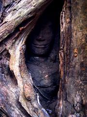Hidden Smile in Angkor (steveneschlotterbeck) Tags: aitas angkor