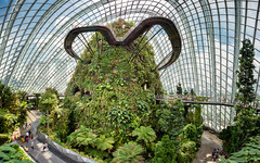 The Cloud Walk (claustral) Tags: panorama ptgui wide cloudwalk marinabaygardens greenhouse glasshouse plants indoors warm modern glass singapore 2018 cloudforestdome tropical gardensbythebay cloudforest