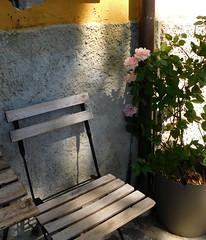 Campiglia (cristina.sanvito) Tags: campiglia cinqueterre mare sea sedia chair rosa rose strada street